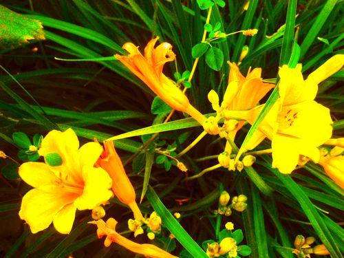 Fleur15