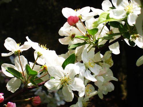 Fleur(s 2