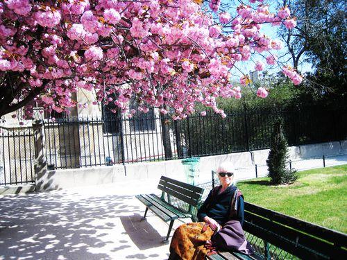 Dans le jardin de l'Archevêché