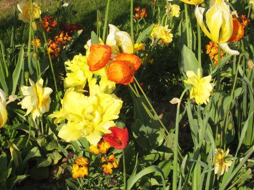 Les fleurs de l'archevêché2