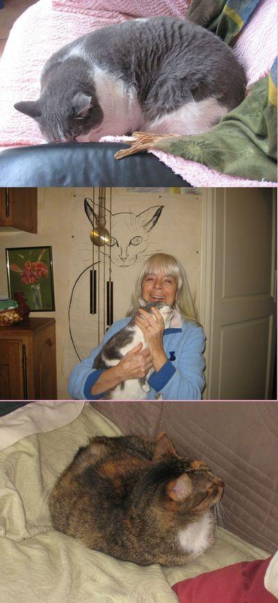 Liliane et ses chats
