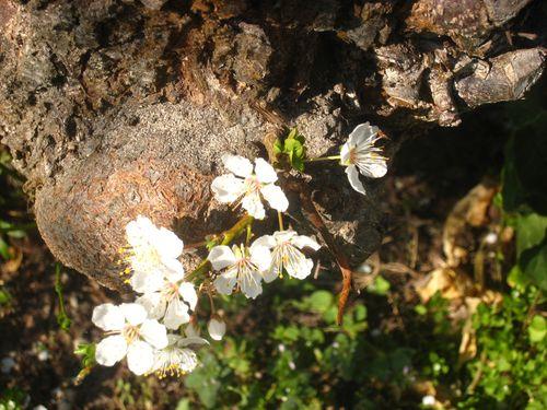 Petites-fleurs-2
