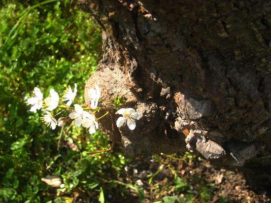 Petites-fleurs