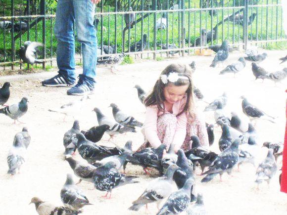 Petite fille aux pigeons