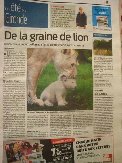 Lionceau de Pessac Gironde