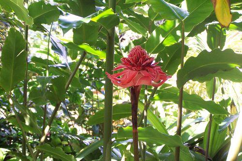 Rose de porcelaine 2